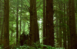 Ein Wald (Bild: Rainforests of the Olympic Coast (http://www.flickr.com/photos/hiimniko/2963767326/) von hiimniko (http://www.flickr.com/photos/hiimniko/) unter CC-BY-Lizenz (http://creativecommons.org/licenses/by/2.0/deed.de)